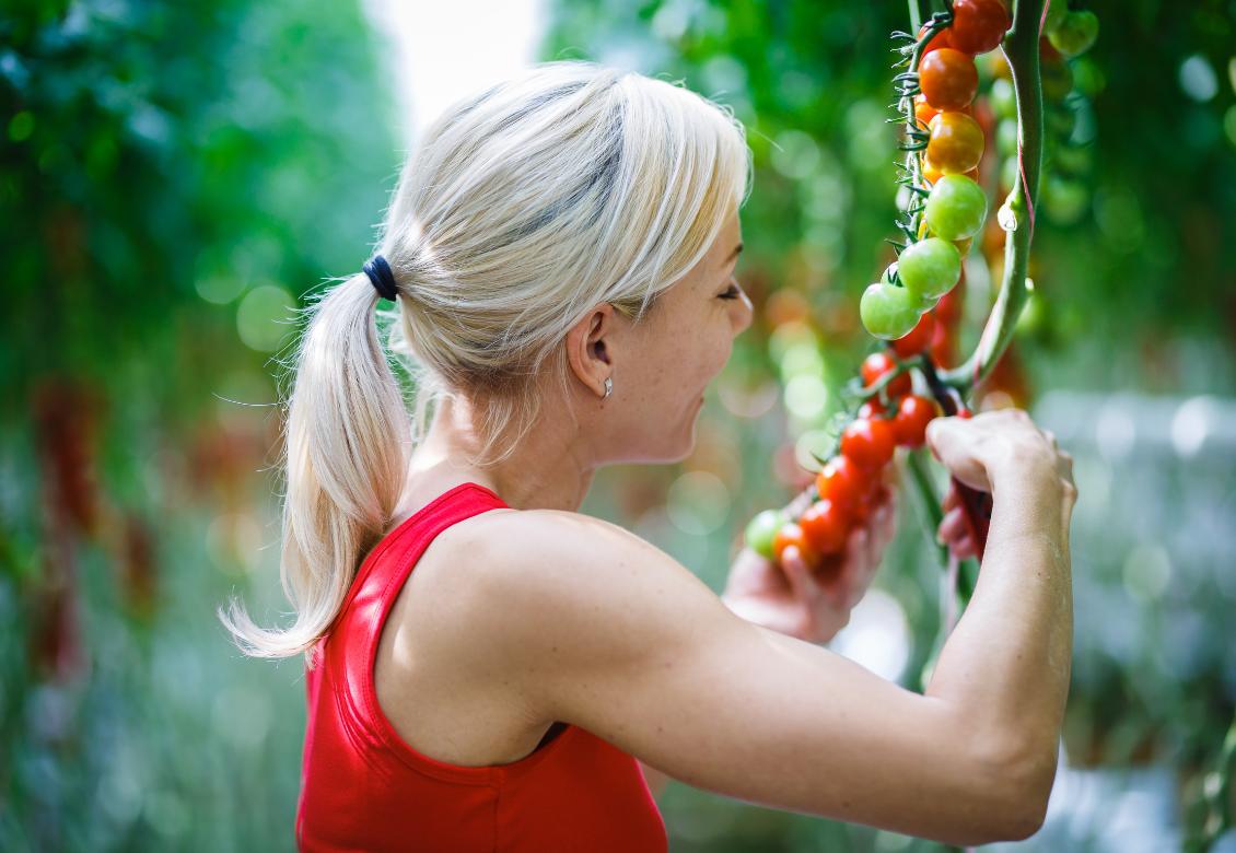 7 tipov ako vypestovať sladučké paradajky. POZOR! Treba ich vysiať už vo februári