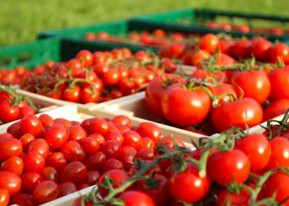 Čerstvé paradajky od slovenských farmárov aj vzime