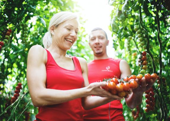 Slovenskí rajčinári pomocou nových obalov bojujú proti nekvalitným paradajkám zo zahraničia