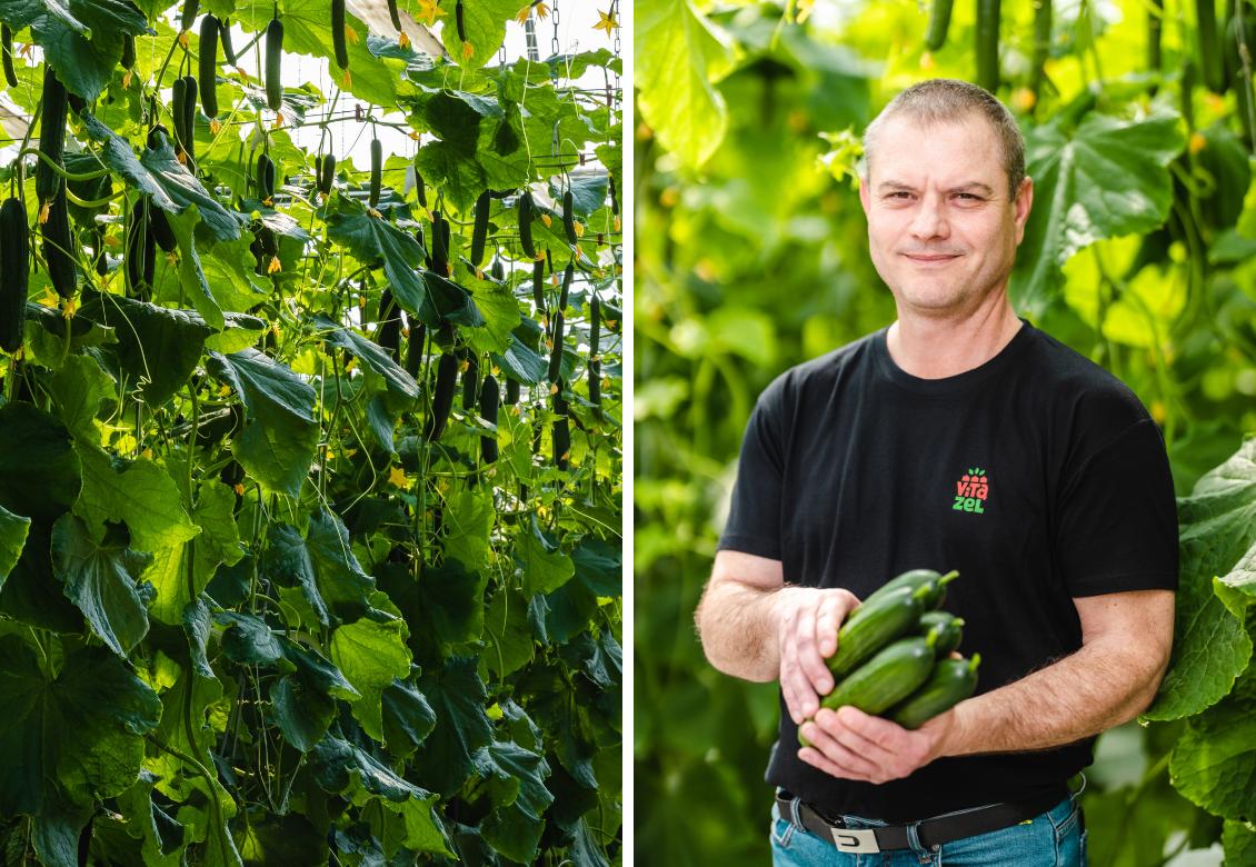 Uhorky sa unás pestujú takmer celý rok. Aj vďaka inovatívnym metódam ahi-tech sme sebestačnejšou krajinou