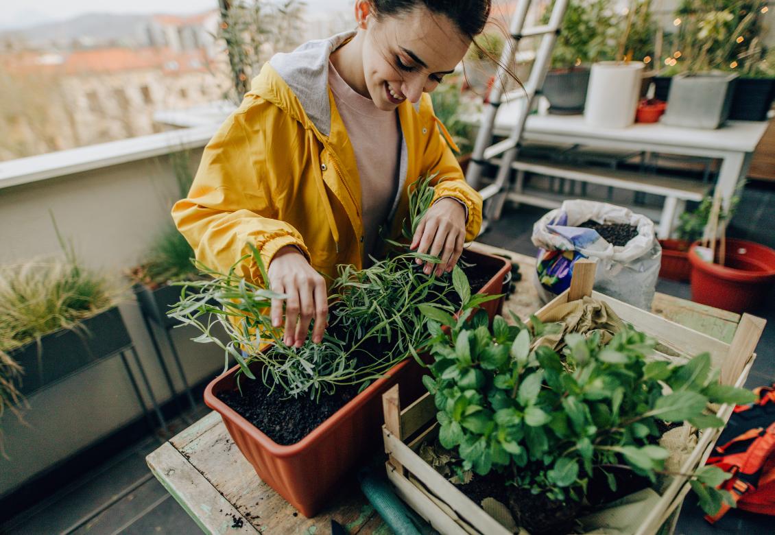 Akú zeleninu aovocie pestovať na balkóne alebo terase?