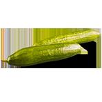 Šalátove uhorky