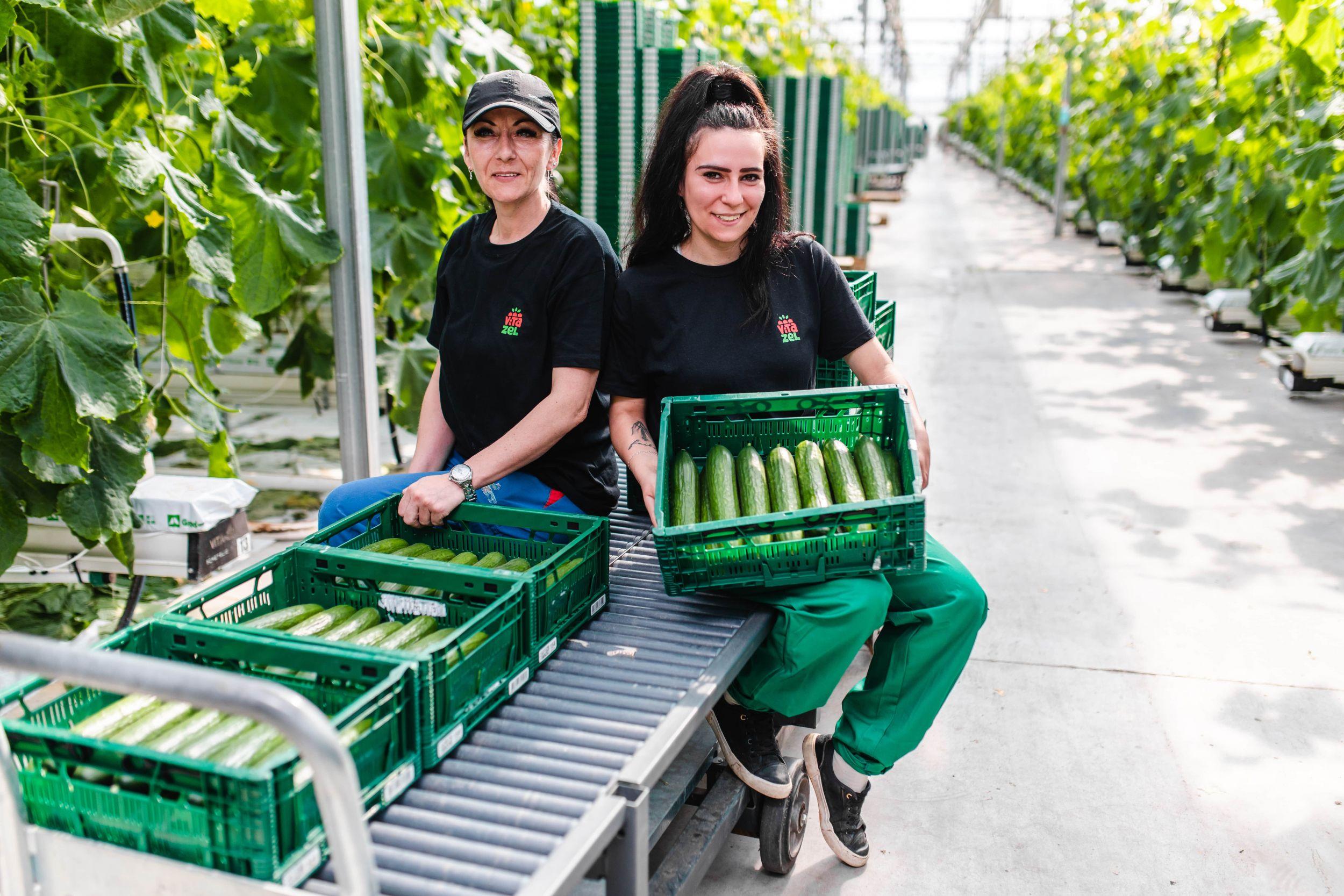 pestovanie uhoriek